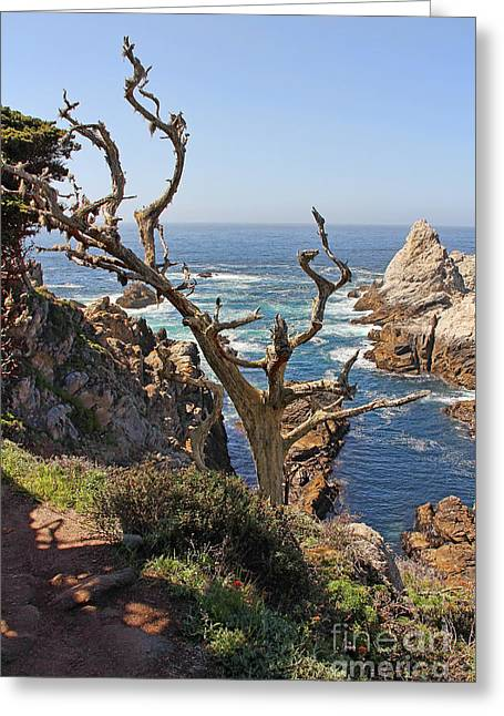 Point Lobos Greeting Cards - Pinnacle Cove Point Lobos Scenic View Greeting Card by Jack Schultz