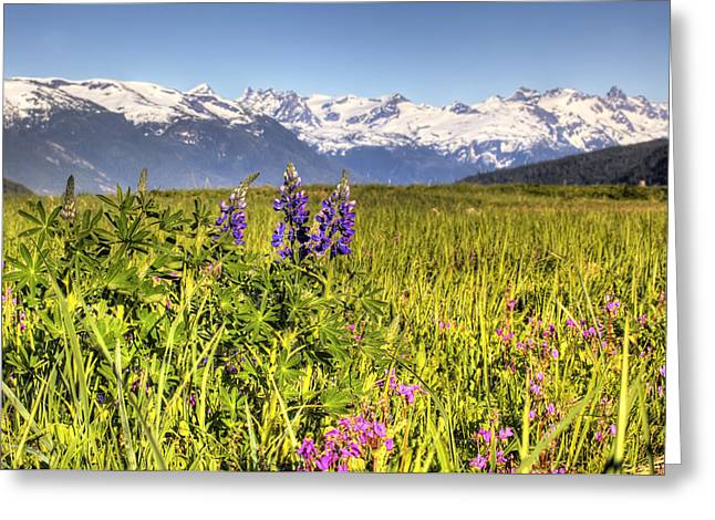 Hdr Landscape Greeting Cards - Scenic View Of A Wildflower Meadow And Greeting Card by Michael Criss