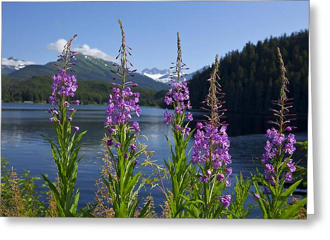 Southeast Alaska Greeting Cards - Scenic View Of Auke Lake And Fireweed Greeting Card by John Hyde