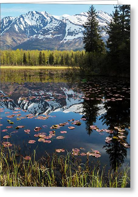 Scenic View Of Lily Pads On A Pond Greeting Card by Doug Lindstrand
