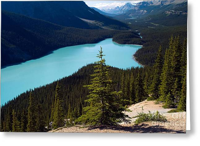 Mountain Valley Greeting Cards - Scenic View Of Peyto Lake Greeting Card by Rafael Macia