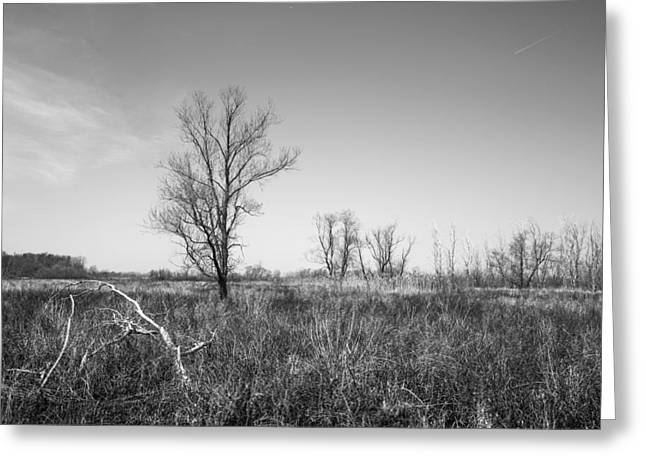 Wildlife Refuge. Greeting Cards - Scenic Wetlands Greeting Card by Dale Kincaid
