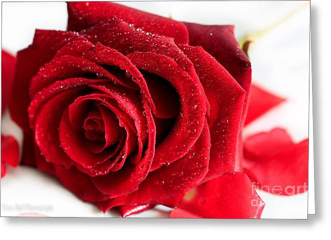 Scent Of A Rose Greeting Card by Tracy  Hall