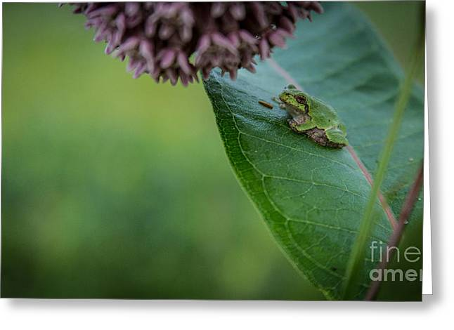 Nature Center Greeting Cards - Schlitz Audubon Tree Frog Greeting Card by Andrew Slater