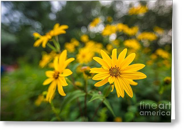 Nature Center Greeting Cards - Schlitz Audubon Wild Flower Greeting Card by Andrew Slater