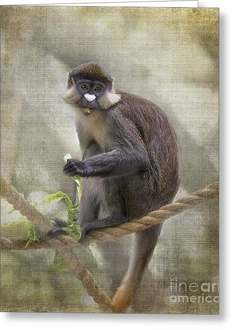 Tn Greeting Cards - Schmidts red-tailed Guenon happy ending Greeting Card by TN Fairey