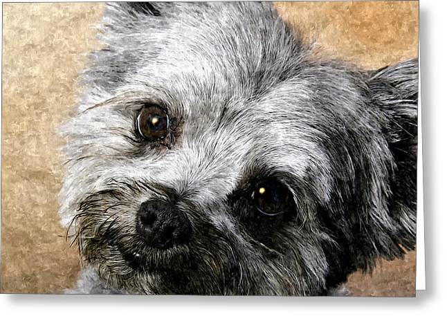 Puppies Mixed Media Greeting Cards - Schnauzer Puppy Painting Greeting Card by  Bob and Nadine Johnston