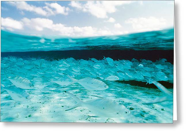 Undersea Photography Photographs Greeting Cards - School Of Fish, Submerged Greeting Card by Panoramic Images
