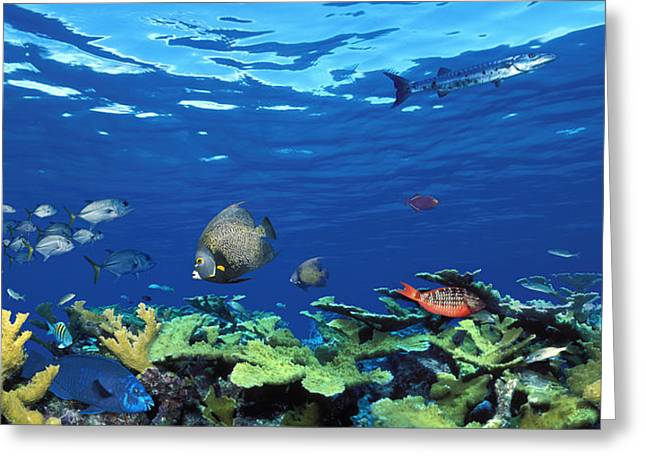School Of Fish Greeting Cards - School Of Fish Swimming In The Sea Greeting Card by Panoramic Images