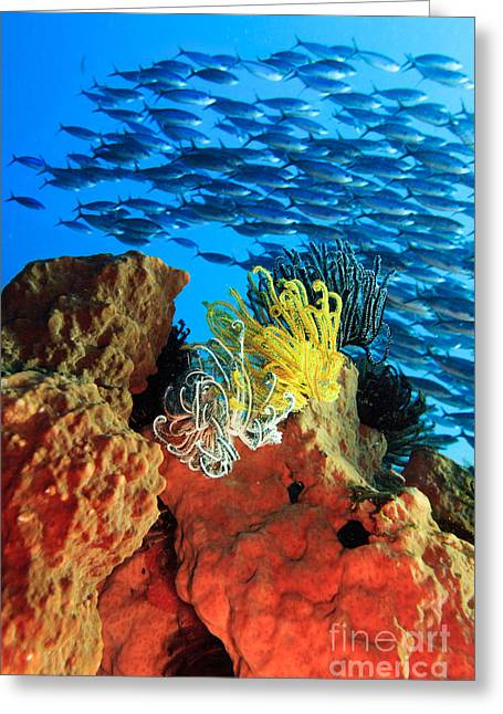 Sulawesi Greeting Cards - School of fishes Greeting Card by MotHaiBaPhoto Prints