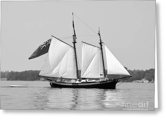 Confederate Flag Greeting Cards - Schooner Clipper Ship Greeting Card by Linda Rae Cuthbertson