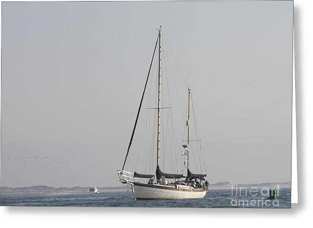 Sailboats In Water Greeting Cards - Schooner Coming To Port Greeting Card by John Telfer