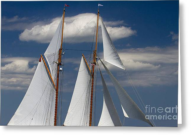 Schooner Photographs Greeting Cards - Schooner Germania Nova Sails Greeting Card by Dustin K Ryan