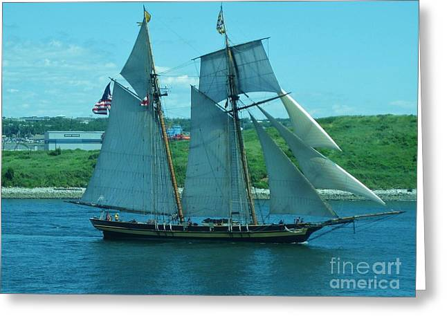 Art In Halifax Greeting Cards - Schooner in Halifax Harbour Greeting Card by John Malone