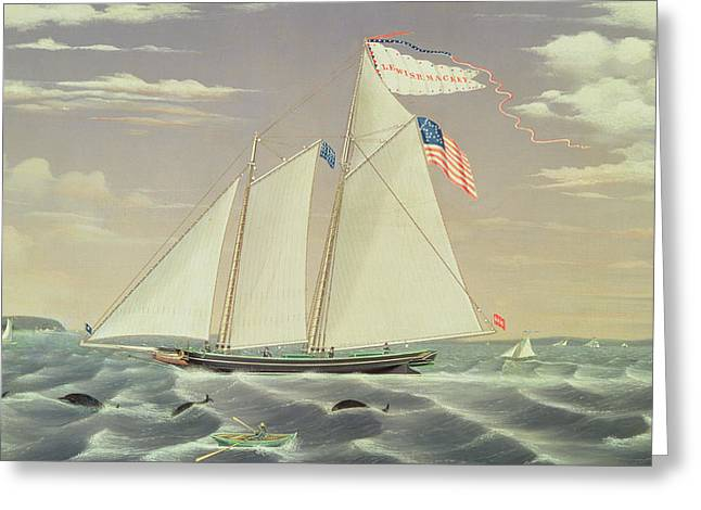 Whale Drawings Greeting Cards - Schooner Lewis R Mackey Greeting Card by James Bard