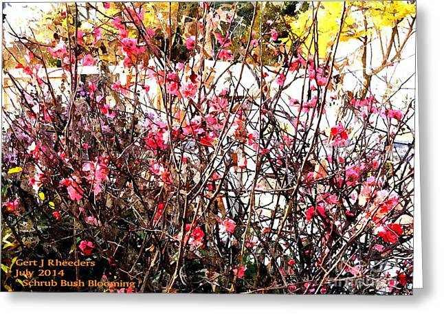 Commercial Photography Paintings Greeting Cards - Schrub Bush Blooming Greeting Card by Gert J Rheeders