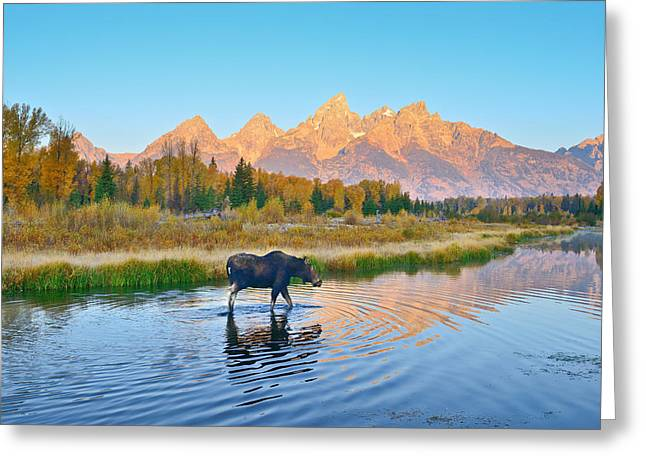 Landscape Art Greeting Cards - Schwabacher Morning Travels Greeting Card by Greg Norrell