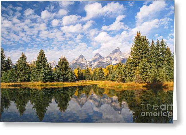 Refection Greeting Cards - Schwabacher Ponds in Grand Teton National Park Greeting Card by Alex Cassels
