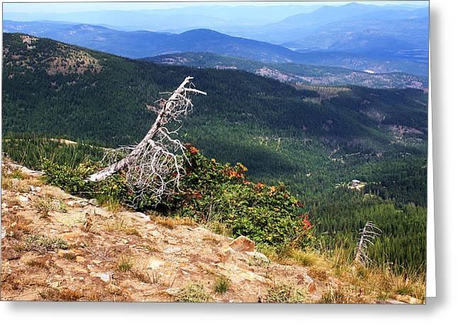 Schweitzer Greeting Cards - Schweitzer Mountain 11 Greeting Card by Ellen Tully