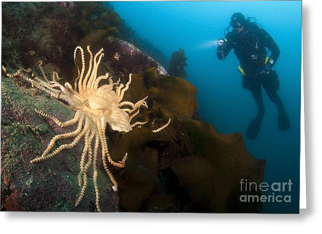 Undersea Photography Greeting Cards - Scientific Diver Looks On At A Giant Greeting Card by Steve Jones