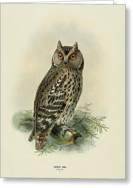 Naturalist Greeting Cards - Scops Owl  Greeting Card by J G Keulemans