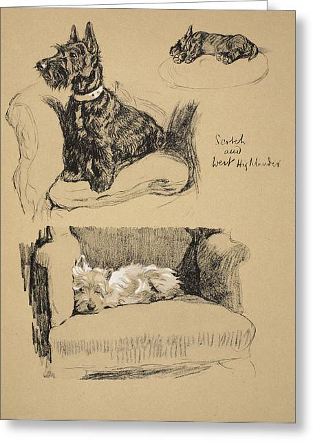 White Dogs Greeting Cards - Scotch And West Highlander, 1930 Greeting Card by Cecil Charles Windsor Aldin