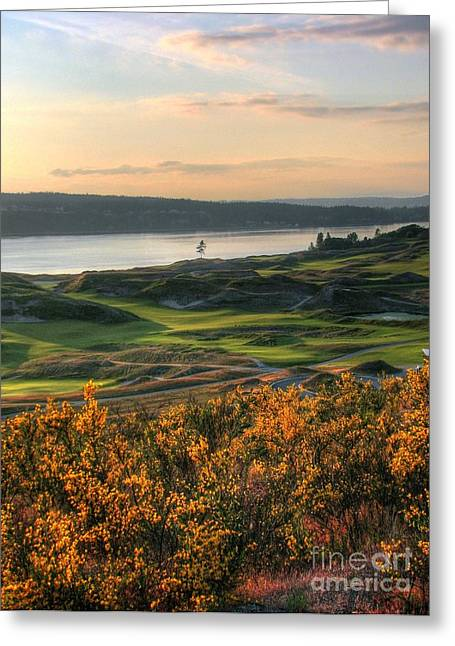 South Puget Sound Greeting Cards - Scotch Broom -Chambers Bay Golf Course Greeting Card by Chris Anderson