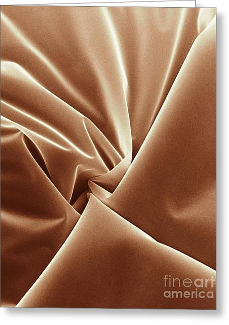 Sem Greeting Cards - Scotch Tape, Sem Greeting Card by David M. Phillips