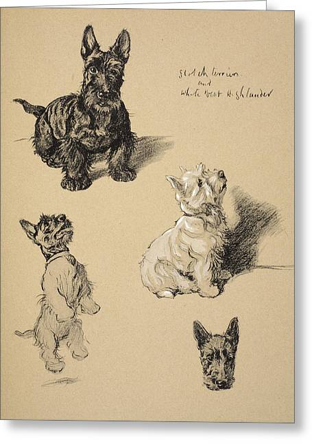 Scotch Terrier And White Westie Greeting Card by Cecil Charles Windsor Aldin
