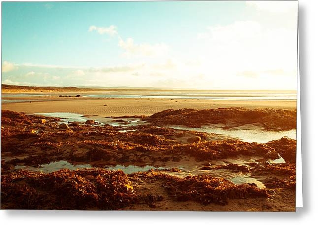 Kelp Greeting Cards - Scottish beach Greeting Card by Tom Gowanlock