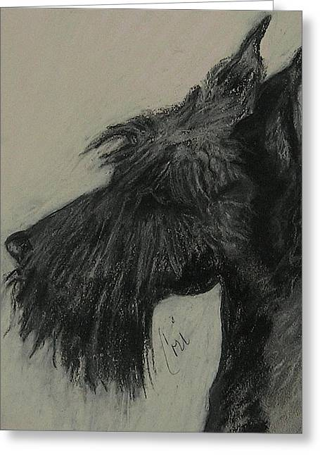 Scottish Terriers Pastels Greeting Cards - Scottish Delight Greeting Card by Cori Solomon