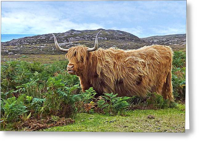 Highlands Of Scotland Greeting Cards - Scottish Highland Cow Greeting Card by Gill Billington