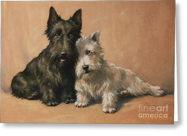 Cute Kitten Drawings Greeting Cards - Scottish Terrier Greeting Card by Celestial Images