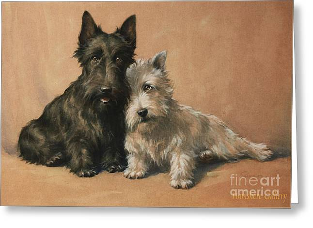 Scottish Terrier Greeting Card by Christopher Gifford Ambler