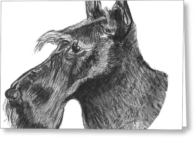 Dog Owner Drawings Greeting Cards - Scottish Terrier Dog Greeting Card by Catherine Roberts
