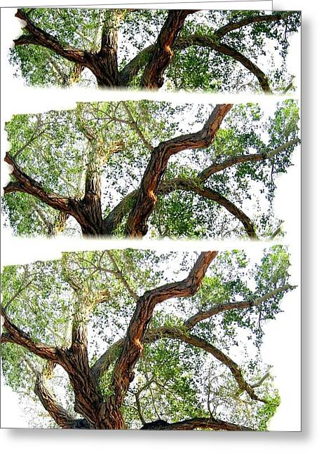 Trio Digital Greeting Cards - Scottys Castle Oak Tree Greeting Card by Will Borden