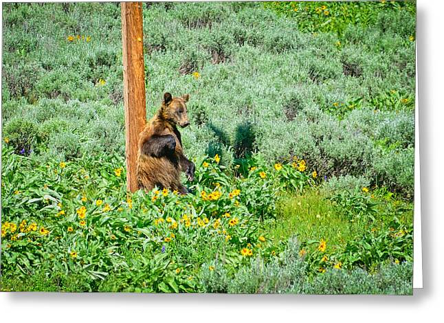 Grand Tetons Greeting Cards - Scratch That Itch Greeting Card by Greg Norrell