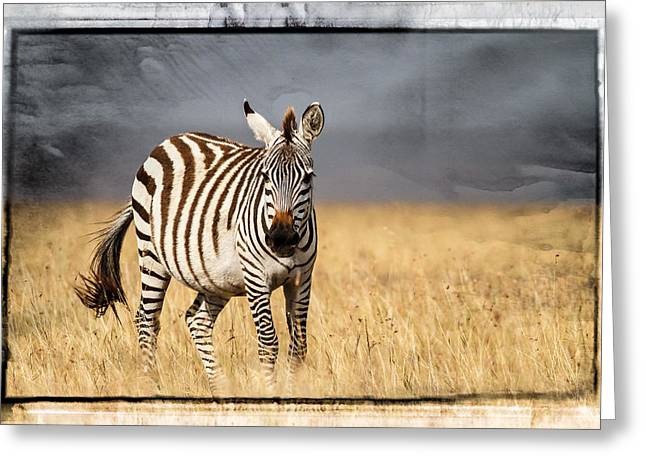 Surveying Greeting Cards - Scratched tin zebra Greeting Card by Mike Gaudaur
