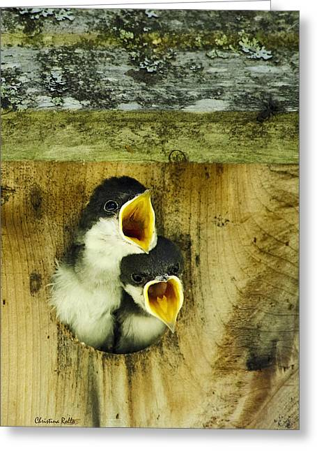 Hungry Chicks Greeting Cards - Screaming Hungry Greeting Card by Christina Rollo