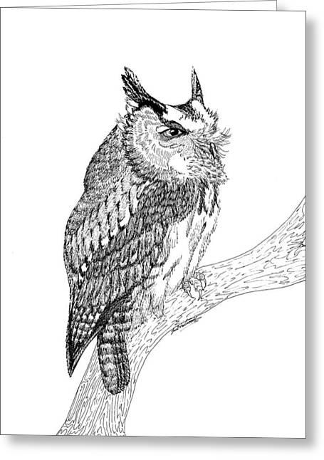 Screech Owl Greeting Card by Lee Halbrook