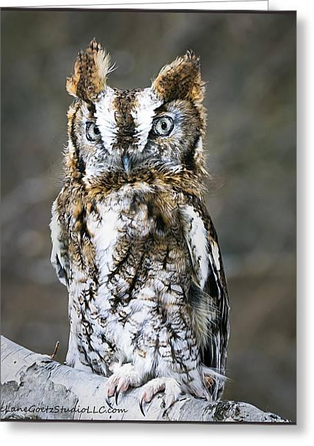 Screech Owl On The Trail Greeting Card by LeeAnn McLaneGoetz McLaneGoetzStudioLLCcom