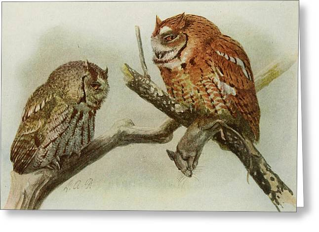 Birds Of A Feather Greeting Cards - Screech Owls Greeting Card by Louis Agassiz Fuertes
