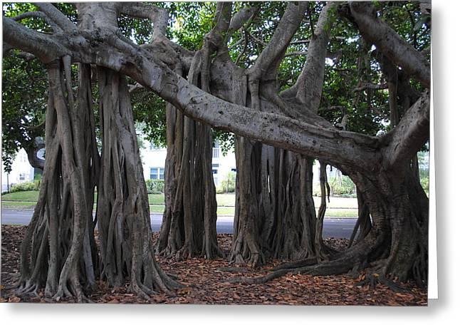 """""""strange Trees"""" Greeting Cards - Screw Trees in Florida Greeting Card by Tammy Burgess"""