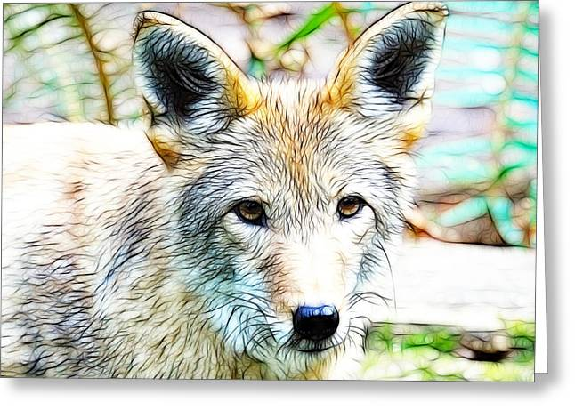 Preditor Greeting Cards - Scrimshaw Coyote Greeting Card by Steve McKinzie