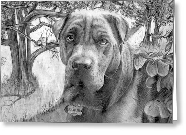 Pencil Drawings Of Pets Greeting Cards - Scubie Greeting Card by John Balestrino