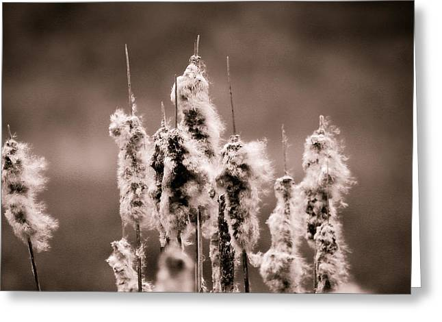 Cattails Greeting Cards - Sculpted By The Wind Greeting Card by Shane Holsclaw