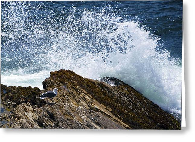 Seabirds Digital Art Greeting Cards - Detail Seagull Sea Spray Greeting Card by Barbara Snyder