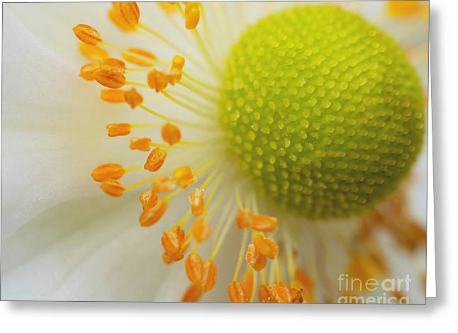 Sea Anemone Abstract Greeting Card by Irina Wardas