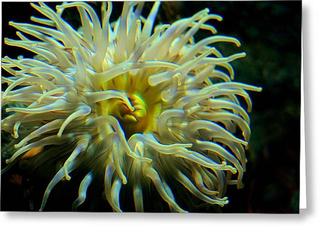 Entrap Greeting Cards - Sea Anemone Greeting Card by Mike Flynn