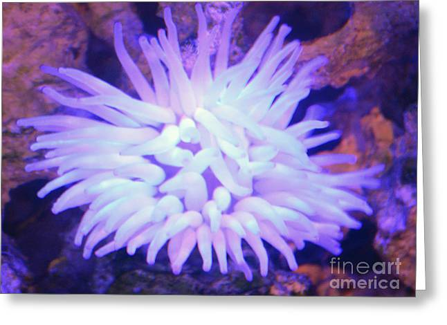 Anchor Underwater Greeting Cards - Sea Anemone Underwater Coral Reef Greeting Card by Shawn O